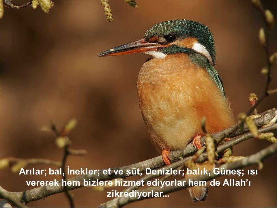 Arılar; bal, İnekler; et ve süt, Denizler; balık, Güneş; ısı vererek hem bizlere hizmet ediyorlar hem de Allah'ı zikrediyorlar...