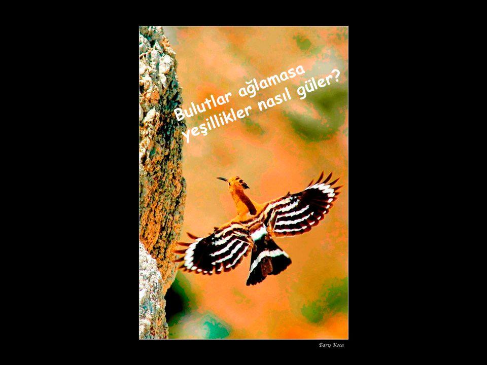 Kuru duayı bırak, ağaç isteyen tohum eker.