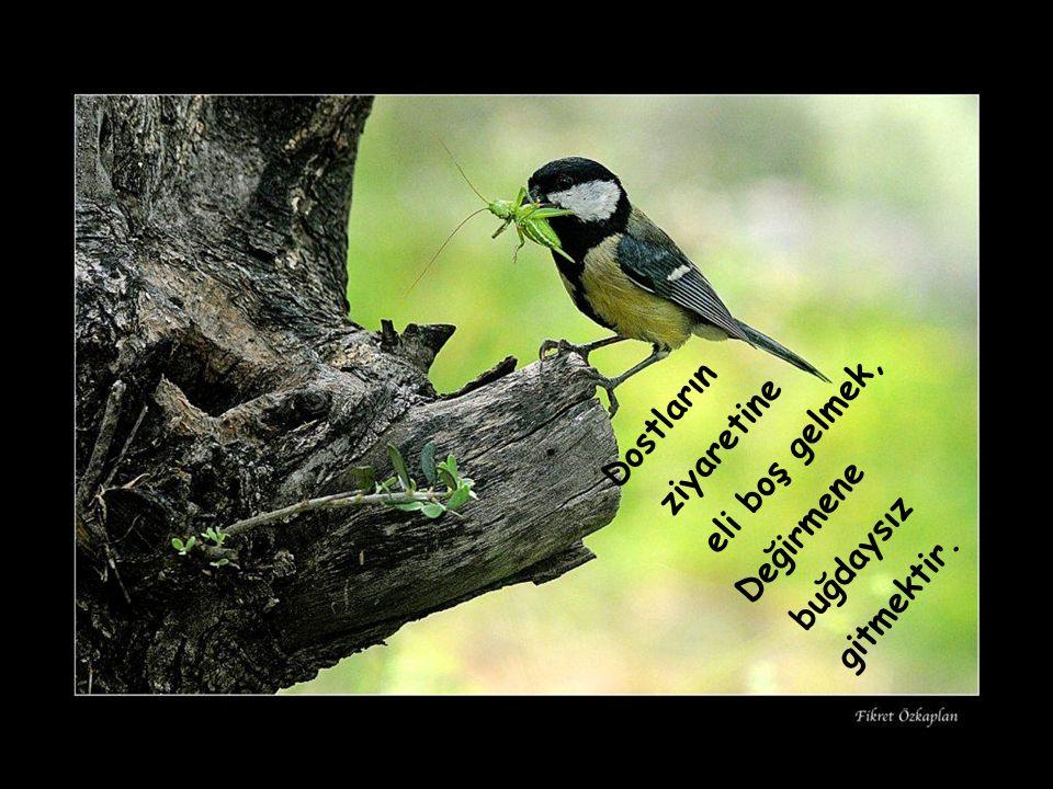 Söz söylemek için önce dinlemek gerekir. Seni dostundan ayıran sözü dinleme.