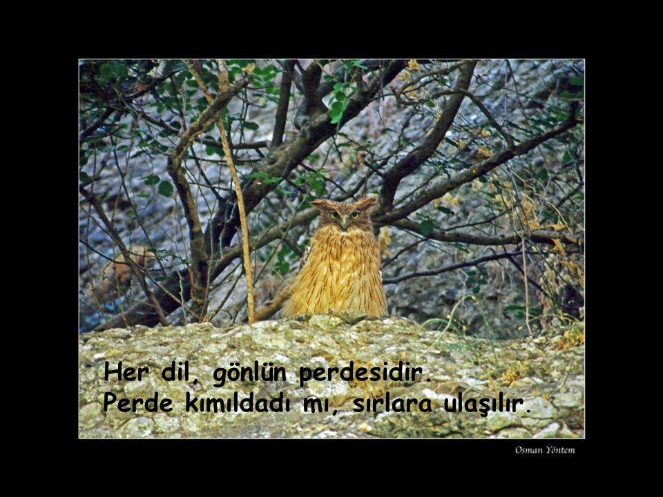 Allah ile olduktan sonra ölüm de, ömür de hoştur..