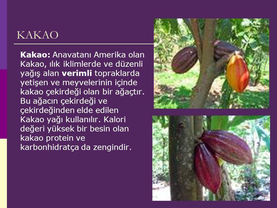 KAKAO Kakao: Anavatanı Amerika olan Kakao, ılık iklimlerde ve düzenli yağış alan verimli topraklarda yetişen ve meyvelerinin içinde kakao çekirdeği olan bir ağaçtır.