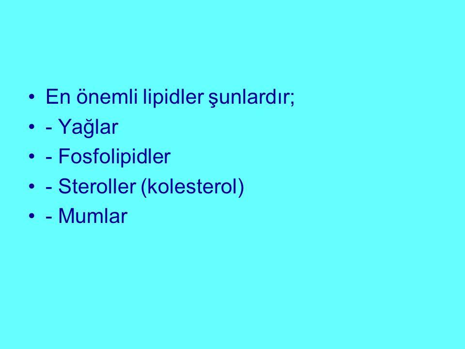 En önemli lipidler şunlardır; - Yağlar - Fosfolipidler - Steroller (kolesterol) - Mumlar