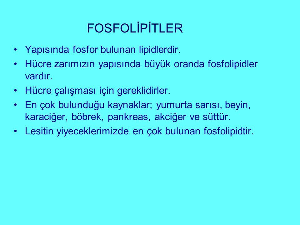 FOSFOLİPİTLER Yapısında fosfor bulunan lipidlerdir. Hücre zarımızın yapısında büyük oranda fosfolipidler vardır. Hücre çalışması için gereklidirler. E