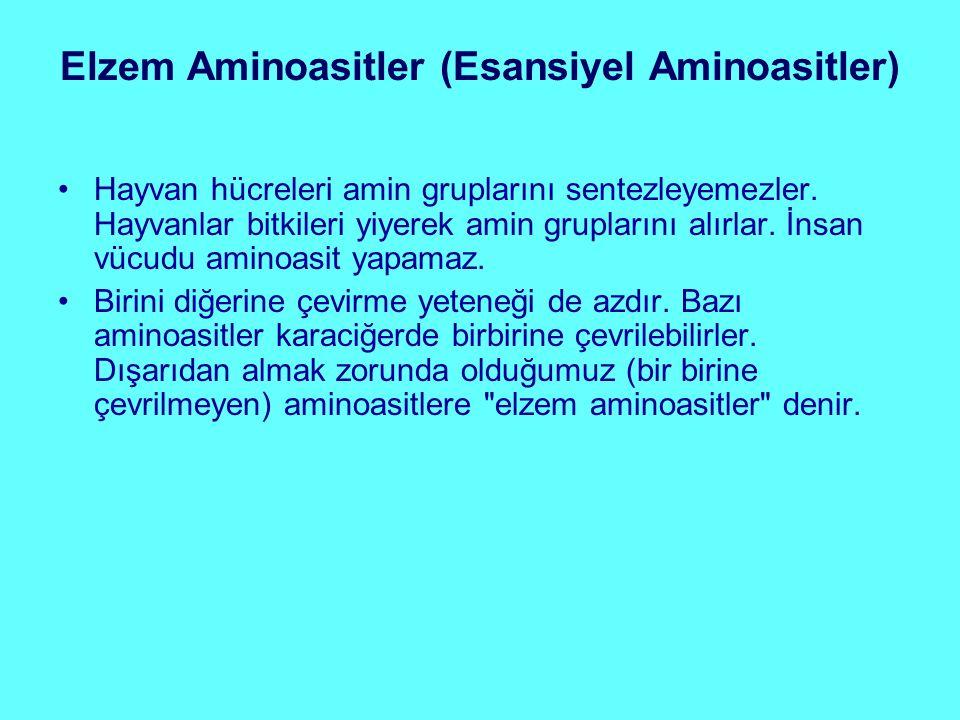 Elzem Aminoasitler (Esansiyel Aminoasitler) Hayvan hücreleri amin gruplarını sentezleyemezler. Hayvanlar bitkileri yiyerek amin gruplarını alırlar. İn