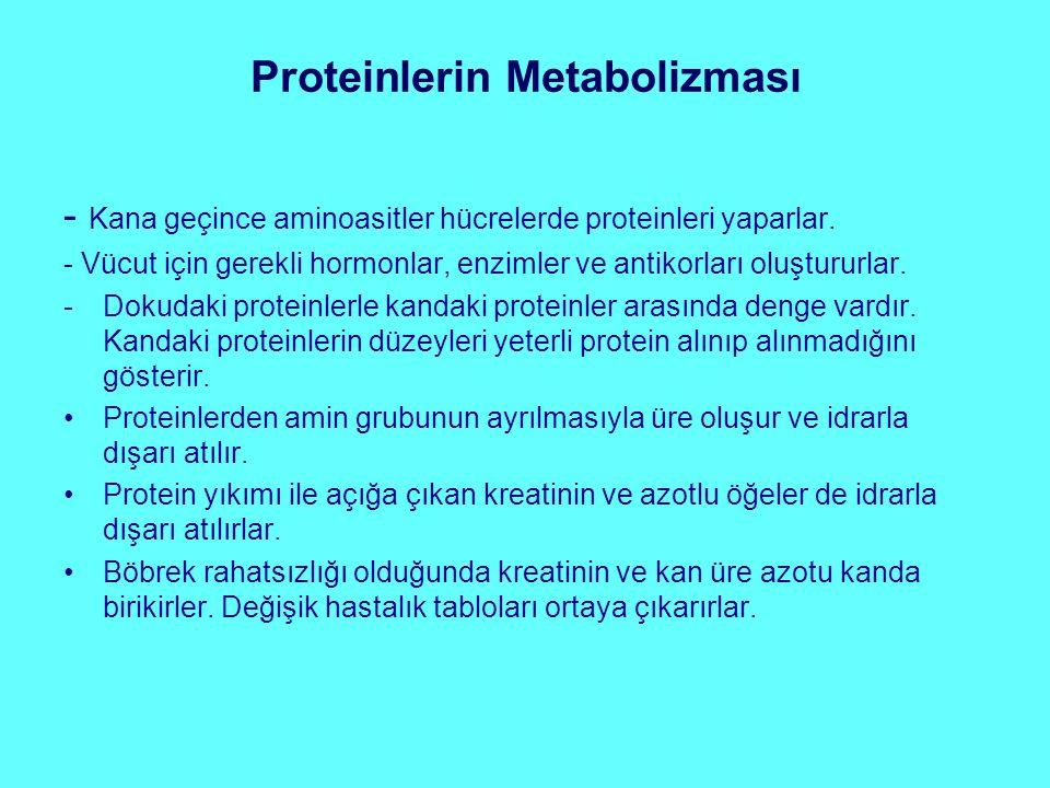 Proteinlerin Metabolizması - Kana geçince aminoasitler hücrelerde proteinleri yaparlar. - Vücut için gerekli hormonlar, enzimler ve antikorları oluştu
