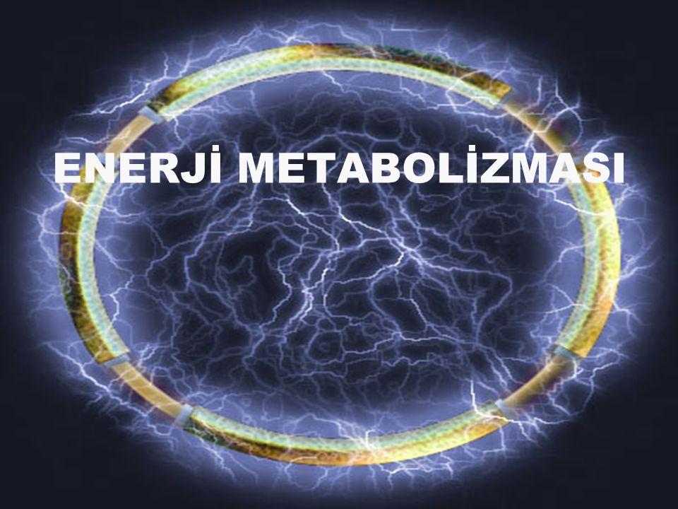ENERJİ METABOLİZMASI