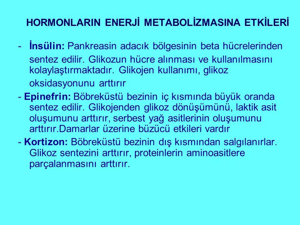 HORMONLARIN ENERJİ METABOLİZMASINA ETKİLERİ -İnsülin: Pankreasin adacık bölgesinin beta hücrelerinden sentez edilir. Glikozun hücre alınması ve kullan