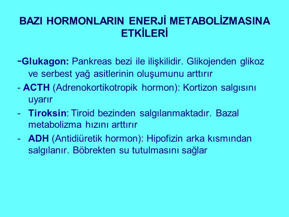 BAZI HORMONLARIN ENERJİ METABOLİZMASINA ETKİLERİ - Glukagon: Pankreas bezi ile ilişkilidir. Glikojenden glikoz ve serbest yağ asitlerinin oluşumunu ar