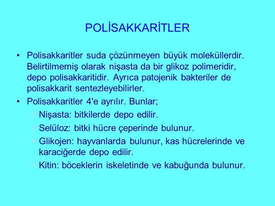 PROTEİNLERİN GÖREVLERİ 1.