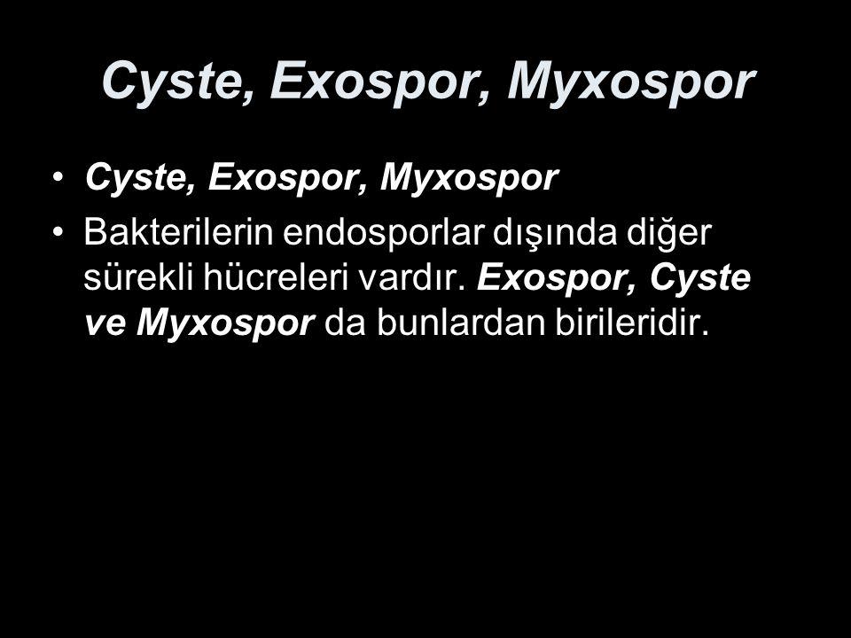 Cyste, Exospor, Myxospor Bakterilerin endosporlar dışında diğer sürekli hücreleri vardır. Exospor, Cyste ve Myxospor da bunlardan birileridir.