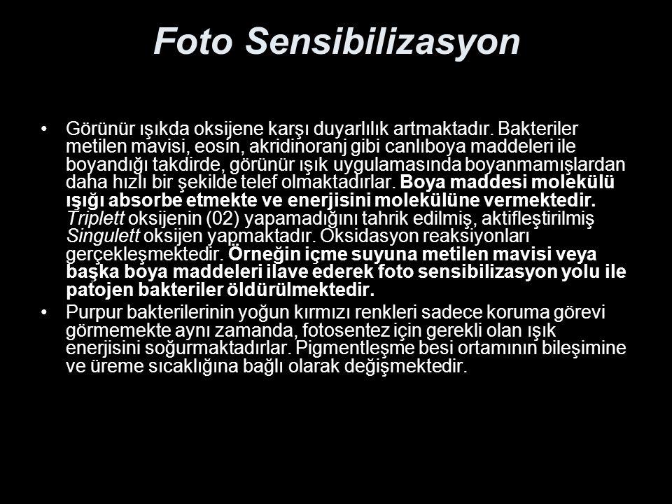 Foto Sensibilizasyon Görünür ışıkda oksijene karşı duyarlılık artmaktadır.