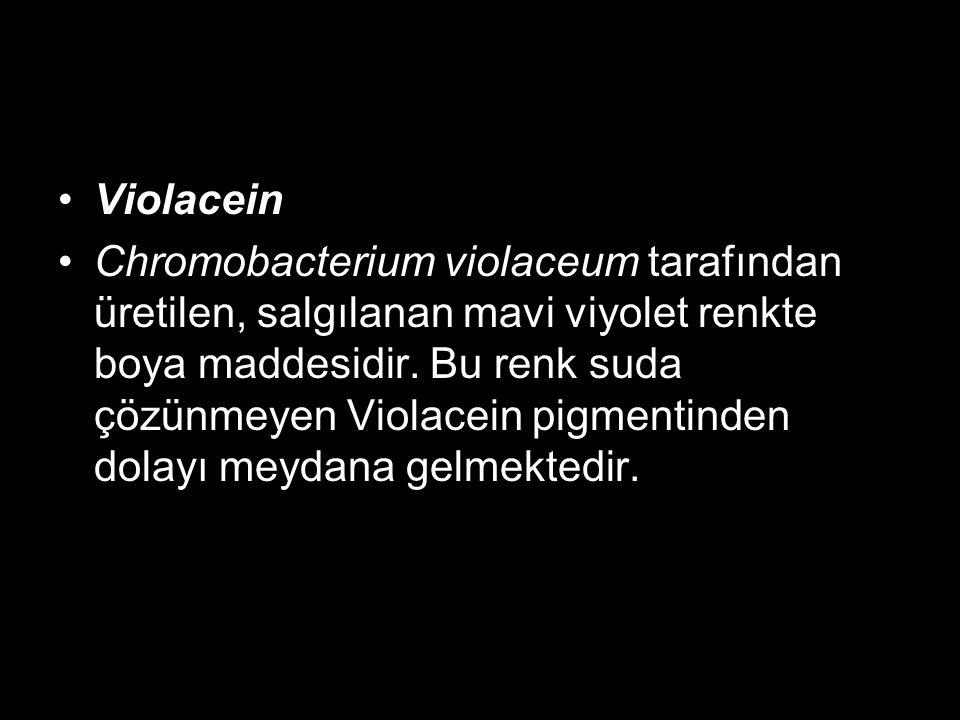 Violacein Chromobacterium violaceum tarafından üretilen, salgılanan mavi viyolet renkte boya maddesidir. Bu renk suda çözünmeyen Violacein pigmentinde