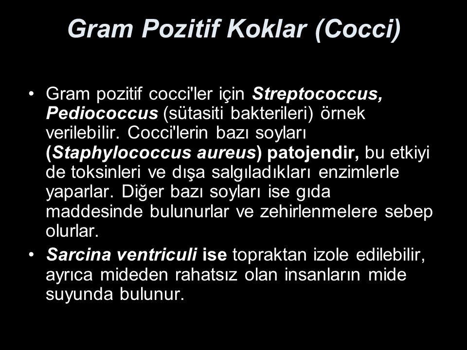 Gram Pozitif Koklar (Cocci) Gram pozitif cocci'ler için Streptococcus, Pediococcus (sütasiti bakterileri) örnek verilebilir. Cocci'lerin bazı soyları