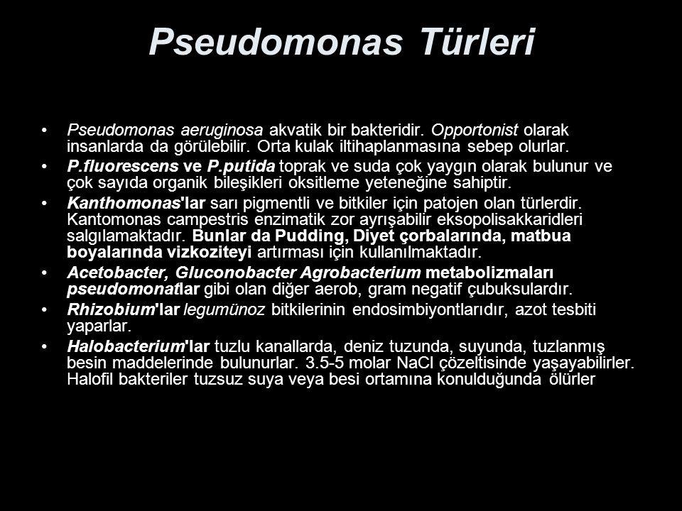 Pseudomonas Türleri Pseudomonas aeruginosa akvatik bir bakteridir. Opportonist olarak insanlarda da görülebilir. Orta kulak iltihaplanmasına sebep olu