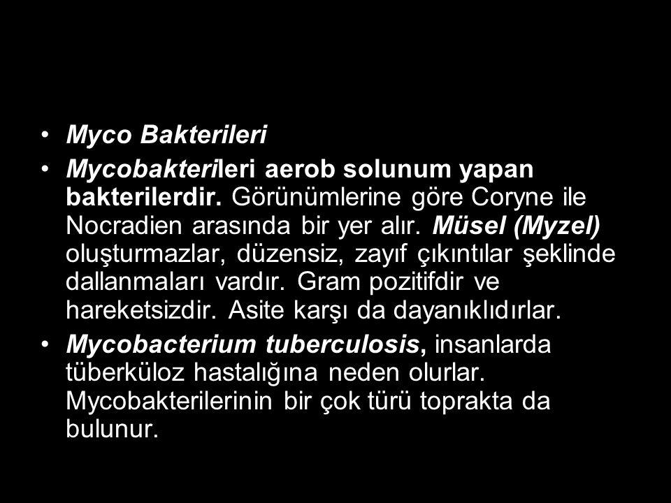 Myco Bakterileri Mycobakterileri aerob solunum yapan bakterilerdir. Görünümlerine göre Coryne ile Nocradien arasında bir yer alır. Müsel (Myzel) oluşt