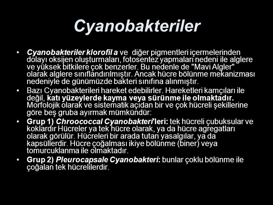 Cyanobakteriler Cyanobakteriler klorofil a ve diğer pigmentleri içermelerinden dolayı oksijen oluşturmaları, fotosentez yapmaları nedeni ile alglere v