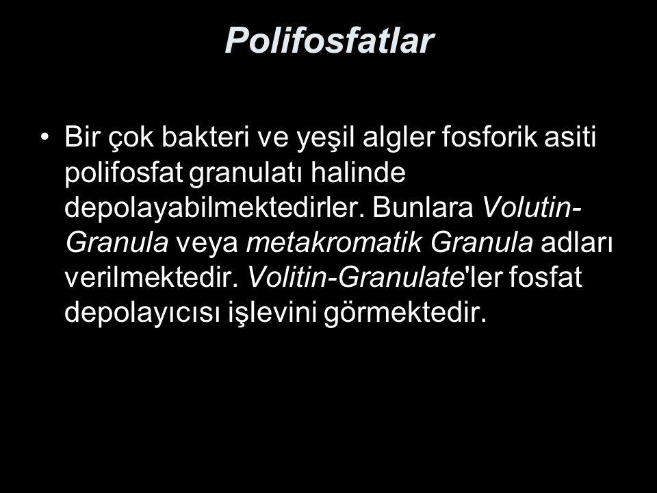 Siliatlar, Carchesium polypinum