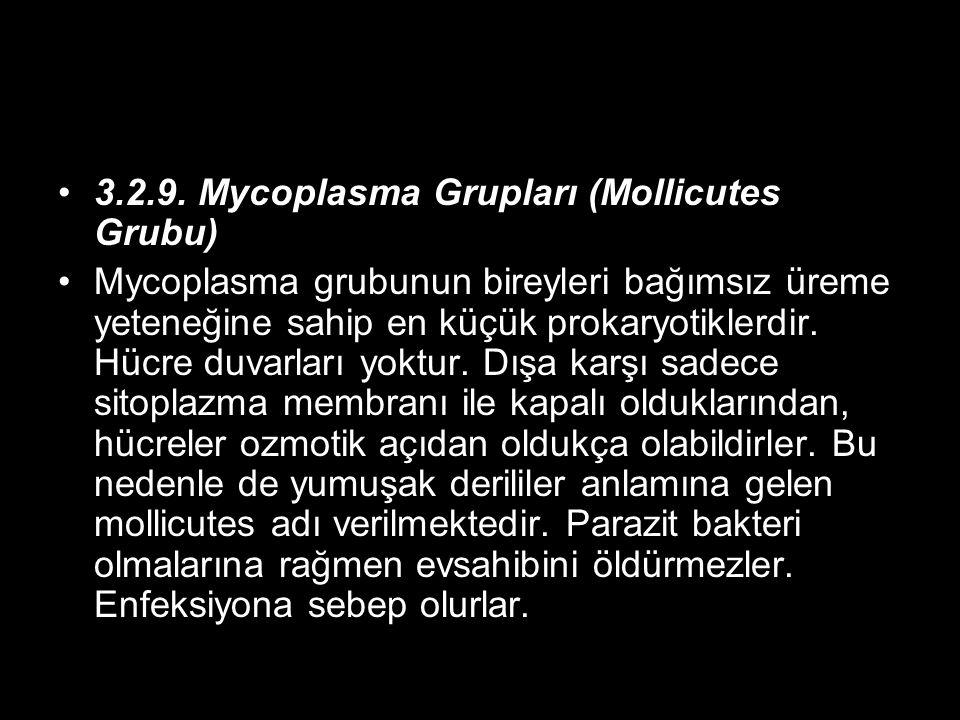 3.2.9. Mycoplasma Grupları (Mollicutes Grubu) Mycoplasma grubunun bireyleri bağımsız üreme yeteneğine sahip en küçük prokaryotiklerdir. Hücre duvarlar