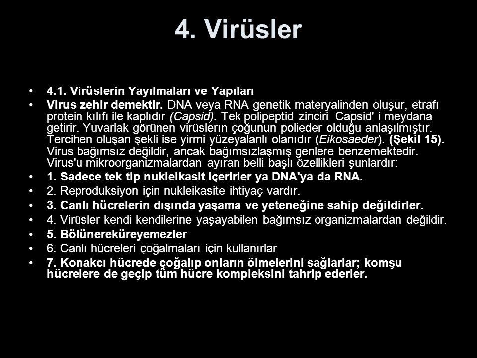 4. Virüsler 4.1. Virüslerin Yayılmaları ve Yapıları Virus zehir demektir. DNA veya RNA genetik materyalinden oluşur, etrafı protein kılıfı ile kaplıdı