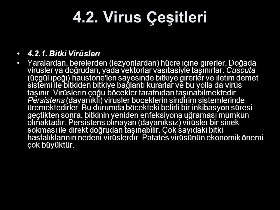 4.2. Virus Çeşitleri 4.2.1. Bitki Virüslerı Yaralardan, berelerden (lezyonlardan) hücre içine girerler. Doğada virüsler ya doğrudan, yada vektorlar va