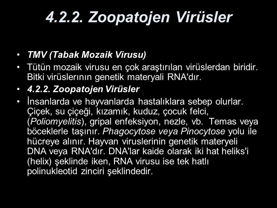 4.2.2. Zoopatojen Virüsler TMV (Tabak Mozaik Virusu) Tütün mozaik virusu en çok araştırılan virüslerdan biridir. Bitki virüslerının genetik materyali