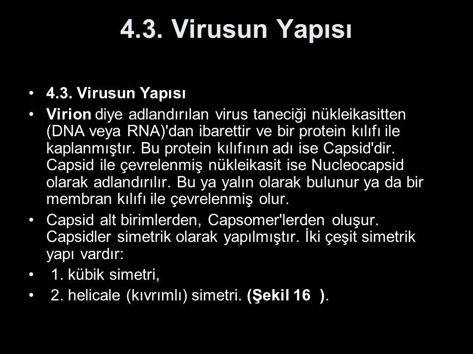 4.3. Virusun Yapısı Virion diye adlandırılan virus taneciği nükleikasitten (DNA veya RNA)'dan ibarettir ve bir protein kılıfı ile kaplanmıştır. Bu pro