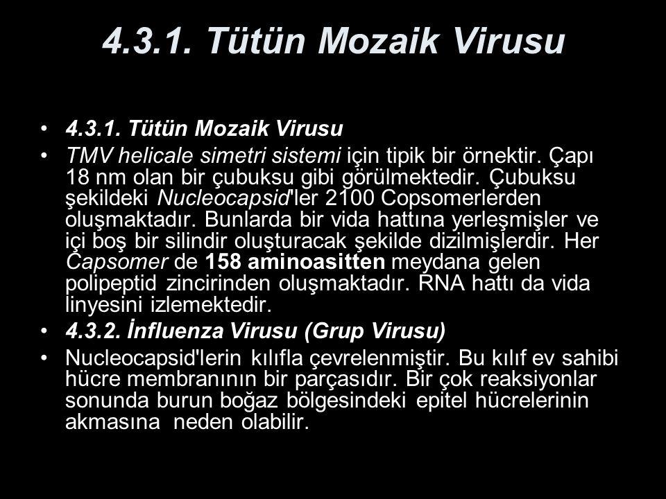 4.3.1. Tütün Mozaik Virusu TMV helicale simetri sistemi için tipik bir örnektir. Çapı 18 nm olan bir çubuksu gibi görülmektedir. Çubuksu şekildeki Nuc