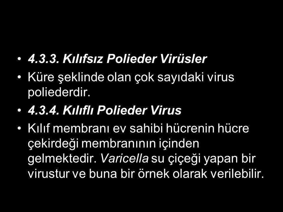 4.3.3. Kılıfsız Polieder Virüsler Küre şeklinde olan çok sayıdaki virus poliederdir. 4.3.4. Kılıflı Polieder Virus Kılıf membranı ev sahibi hücrenin h