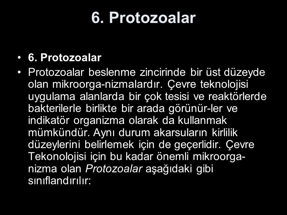 6. Protozoalar Protozoalar beslenme zincirinde bir üst düzeyde olan mikroorga-nizmalardır. Çevre teknolojisi uygulama alanlarda bir çok tesisi ve reak