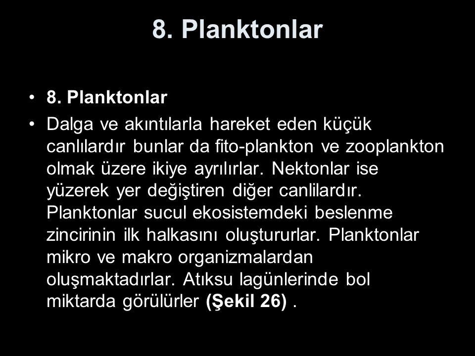8. Planktonlar Dalga ve akıntılarla hareket eden küçük canlılardır bunlar da fito-plankton ve zooplankton olmak üzere ikiye ayrılırlar. Nektonlar ise