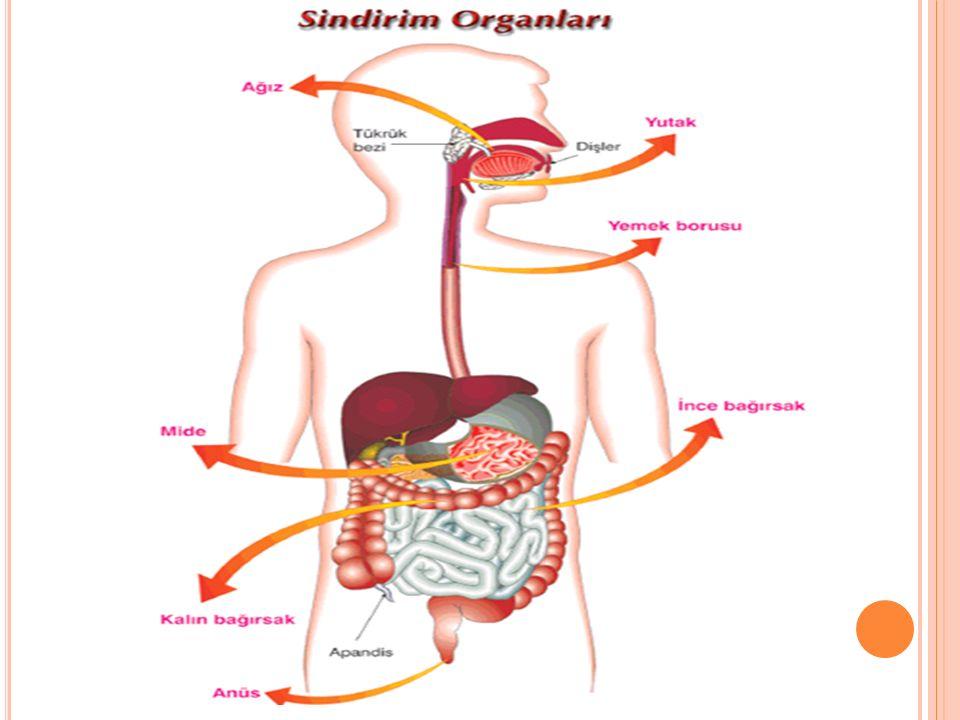 Pankreas özsuyu salgılayarak ince bağırsağa verir.