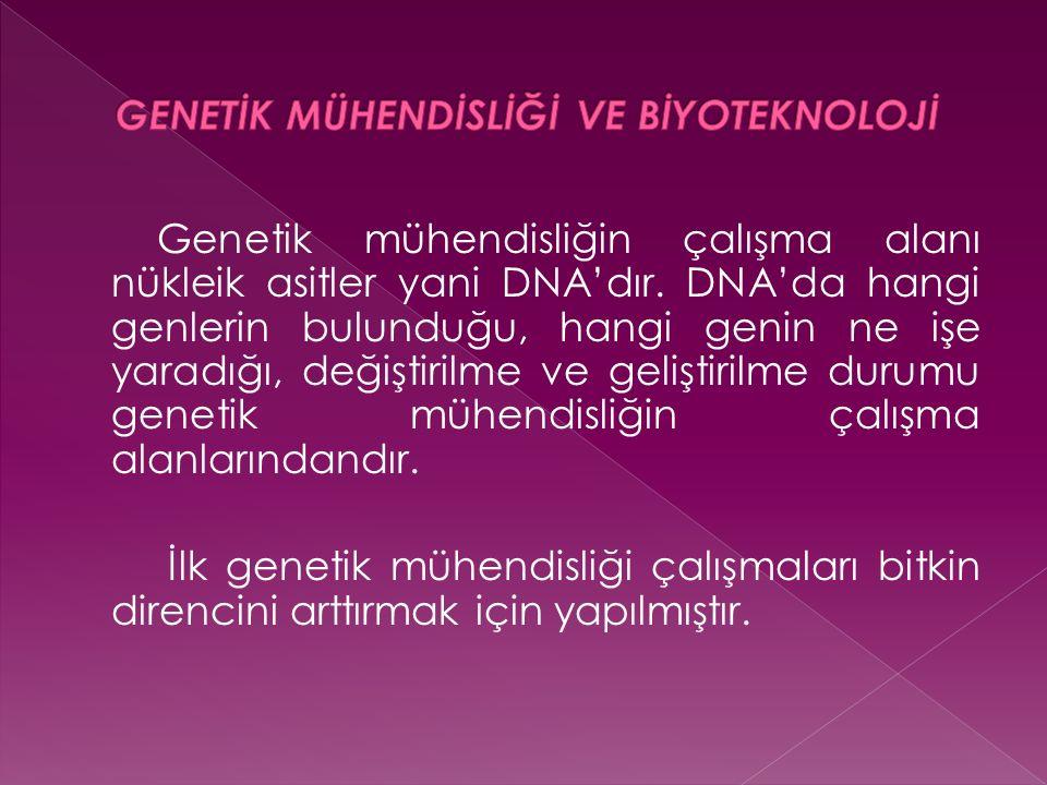 Genetik mühendisliğin çalışma alanı nükleik asitler yani DNA'dır. DNA'da hangi genlerin bulunduğu, hangi genin ne işe yaradığı, değiştirilme ve gelişt