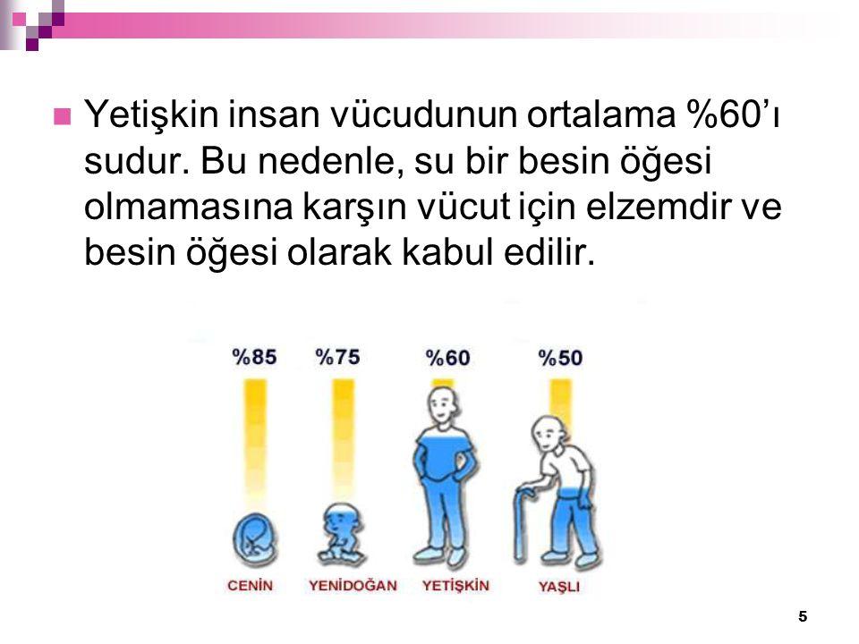 5 Yetişkin insan vücudunun ortalama %60'ı sudur.