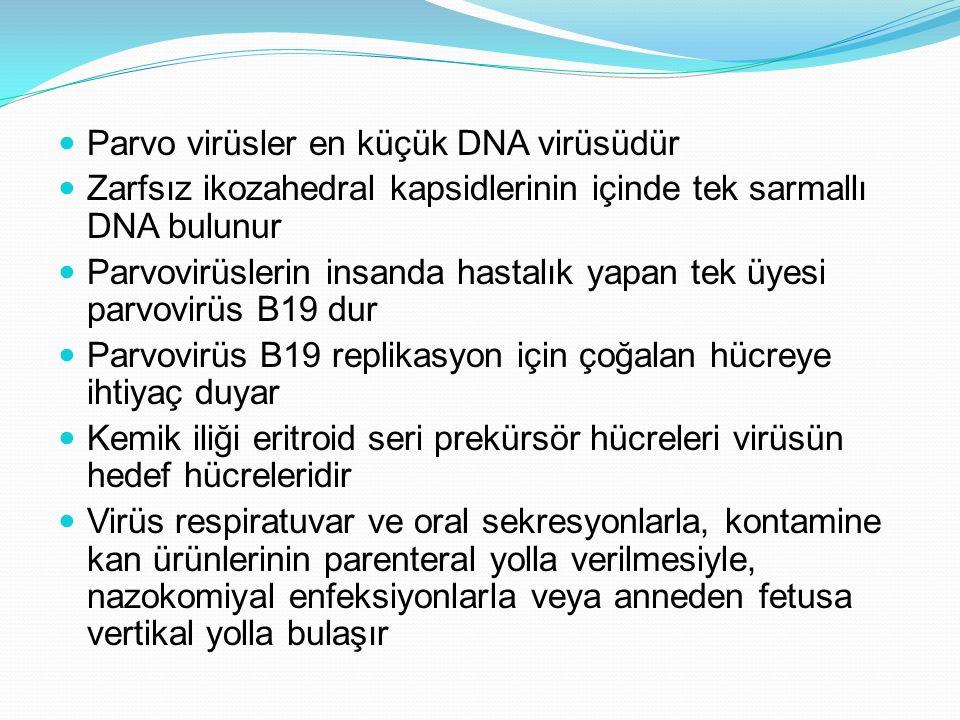 Parvo virüsler en küçük DNA virüsüdür Zarfsız ikozahedral kapsidlerinin içinde tek sarmallı DNA bulunur Parvovirüslerin insanda hastalık yapan tek üyesi parvovirüs B19 dur Parvovirüs B19 replikasyon için çoğalan hücreye ihtiyaç duyar Kemik iliği eritroid seri prekürsör hücreleri virüsün hedef hücreleridir Virüs respiratuvar ve oral sekresyonlarla, kontamine kan ürünlerinin parenteral yolla verilmesiyle, nazokomiyal enfeksiyonlarla veya anneden fetusa vertikal yolla bulaşır