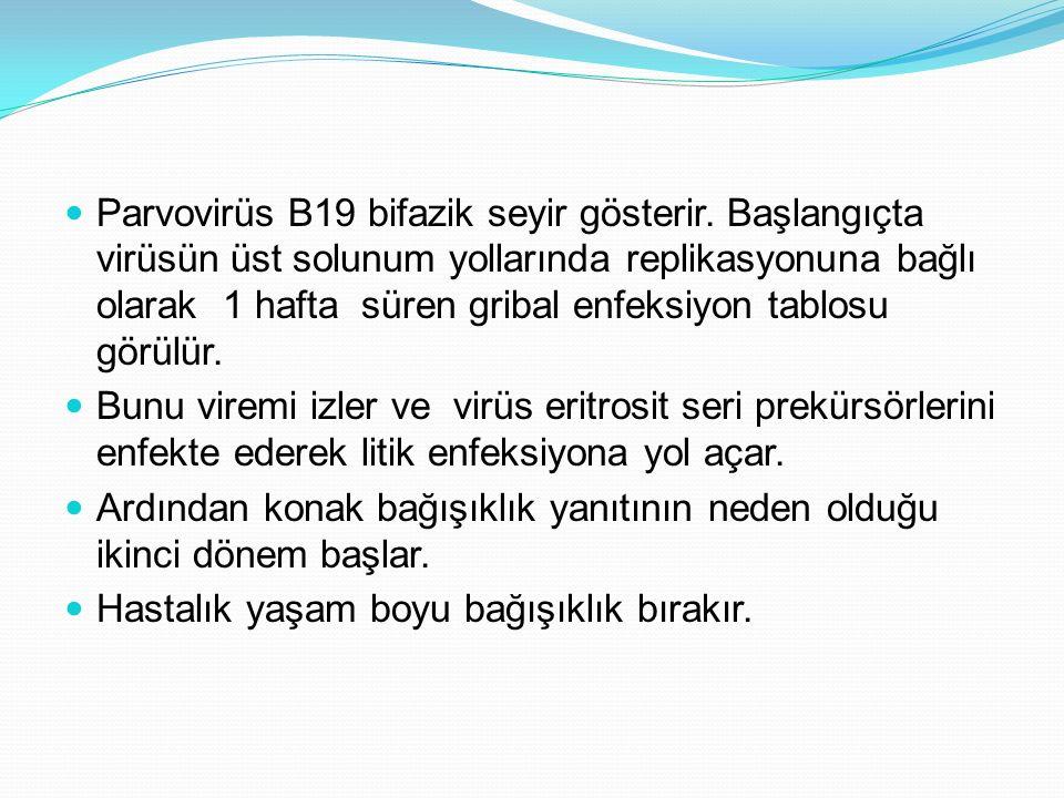 Kronik B19 infeksiyonu ve kronik artritli 2 vakada intravenöz immünglobulin (IVIG) verilmesi ile ilgili bir yayın vardı.