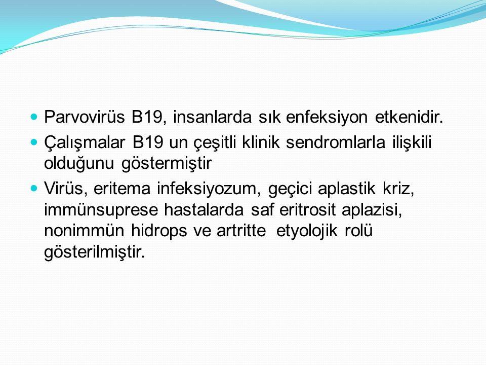 Parvovirüs B19, insanlarda sık enfeksiyon etkenidir. Çalışmalar B19 un çeşitli klinik sendromlarla ilişkili olduğunu göstermiştir Virüs, eritema infek