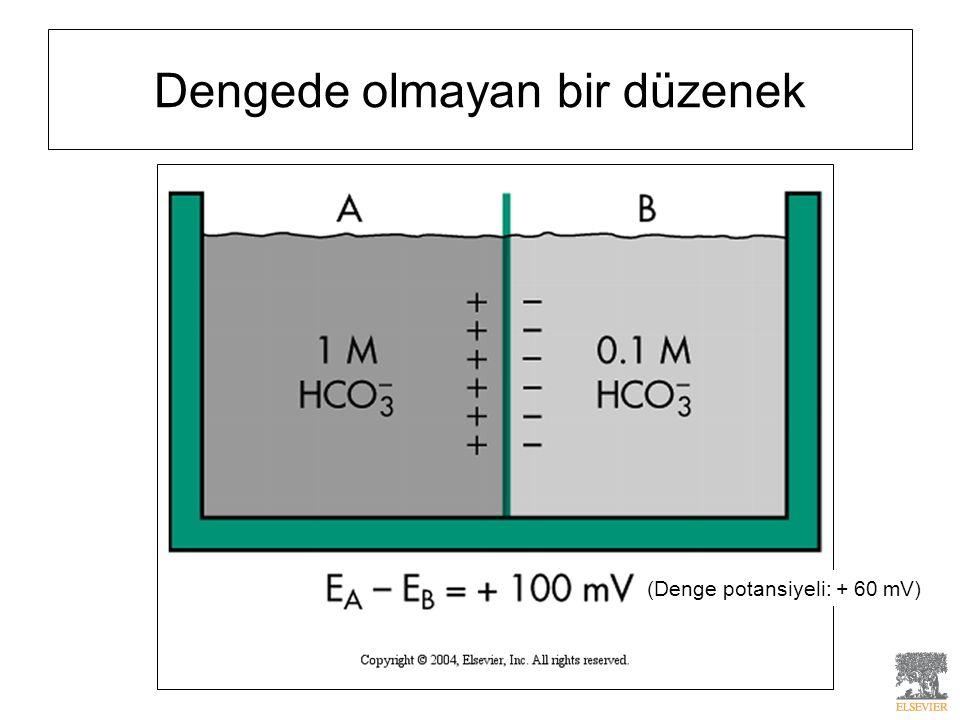 Dengede olmayan bir düzenek (Denge potansiyeli: + 60 mV)