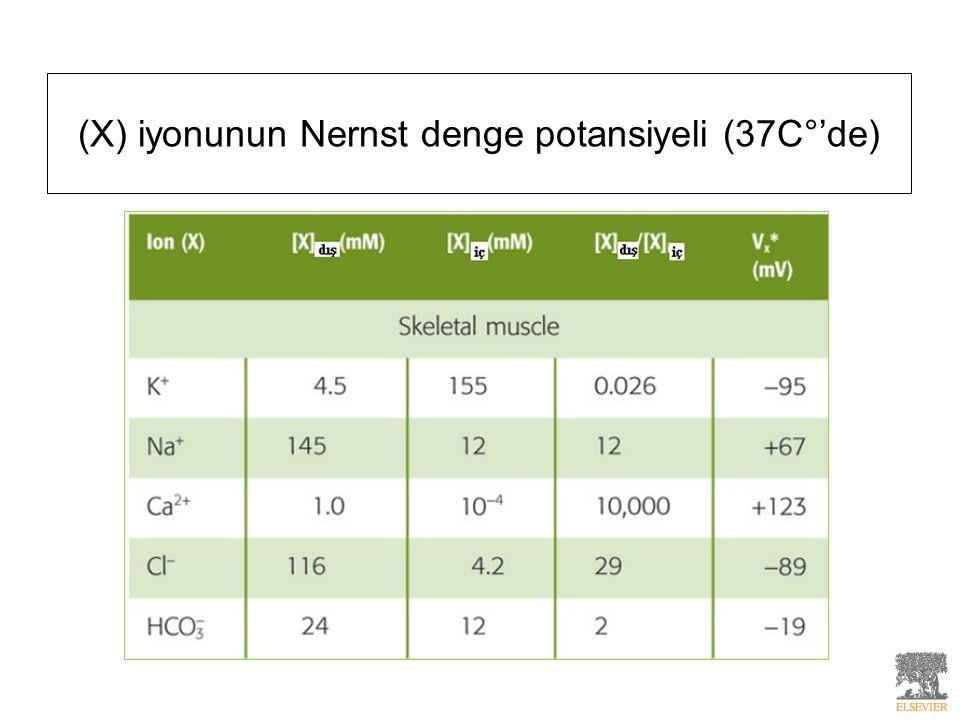 (X) iyonunun Nernst denge potansiyeli (37C°'de)