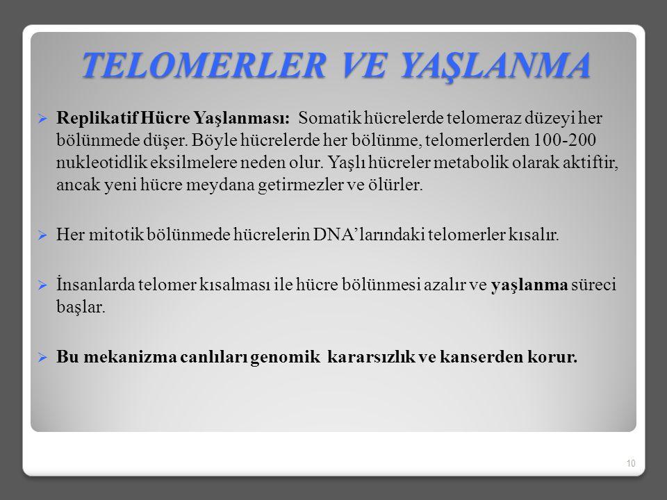 TELOMERLER VE YAŞLANMA  Telomerlerin kısalmaları ilk olarak 1961 yılında, doku kültürü çalışmaları sırasında Hayflick tarafından gözlemlenmiştir  Ha
