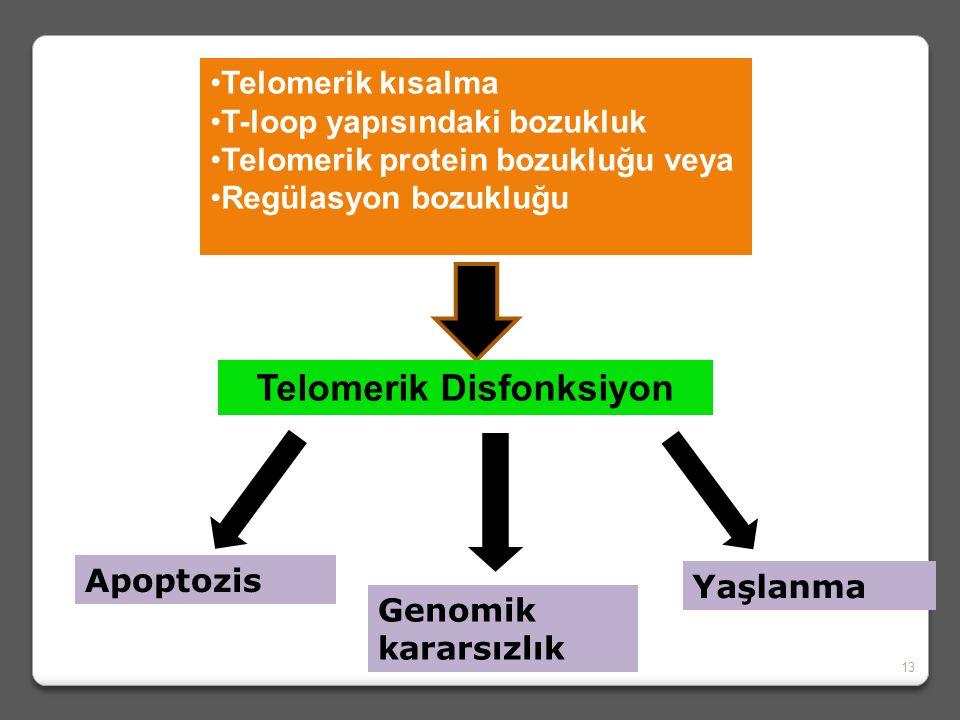 TELOMER FONKSİYON BOZUKLUĞU  Replikatif yaşlanmaya bağlı izlenen telomerik kısalma, t-loop yapısı ve telomerik proteinlerin harabiyeti veya regülasyo