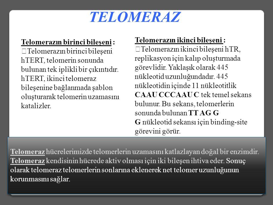 13 Telomerik kısalma T-loop yapısındaki bozukluk Telomerik protein bozukluğu veya Regülasyon bozukluğu Telomerik Disfonksiyon Apoptozis Genomik karars