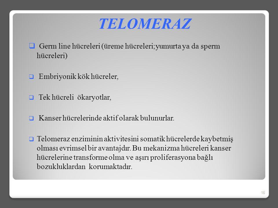 """Figure 5-40 Molecular Biology of the Cell (© Garland Science 2008) Kalıp olarak kullanılan telomeraz RNA'sı Telomeraz protein """"parmaklar"""" Telomeraz RN"""