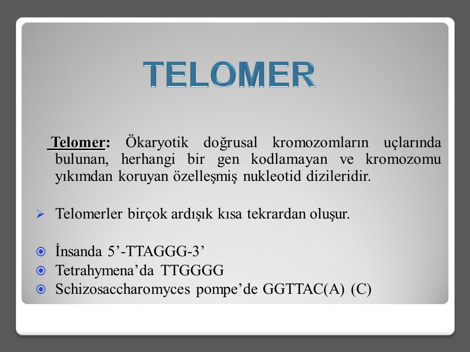 Telomer Telomer: Ökaryotik doğrusal kromozomların uçlarında bulunan, herhangi bir gen kodlamayan ve kromozomu yıkımdan koruyan özelleşmiş nukleotid dizileridir.