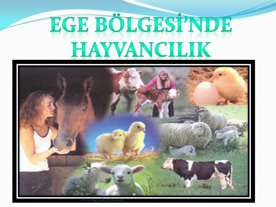 Ege bölgesinde hayvancılık çok gelişmemiştir.