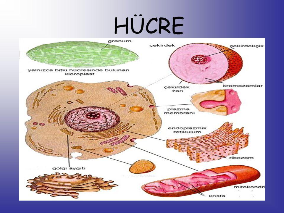 Canlıların en küçük yapı birimine hücre denir. Öğrencilerin yapmış olduğu bir hücre modeli.