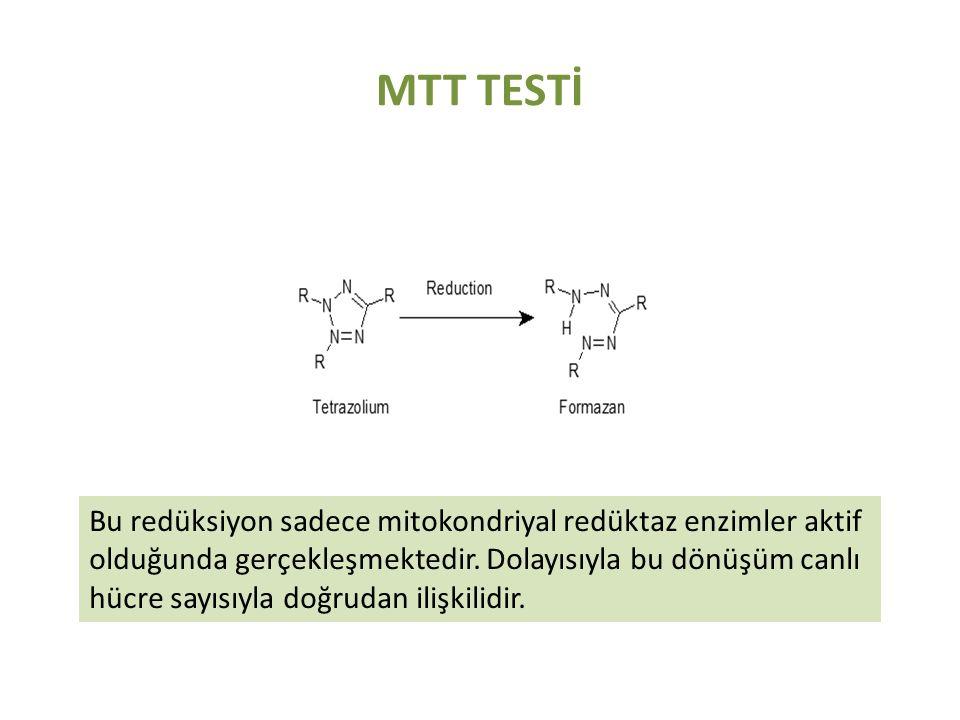 MTT TESTİ Bu redüksiyon sadece mitokondriyal redüktaz enzimler aktif olduğunda gerçekleşmektedir. Dolayısıyla bu dönüşüm canlı hücre sayısıyla doğruda