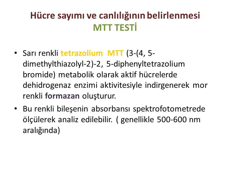 Hücre sayımı ve canlılığının belirlenmesi MTT TESTİ Sarı renkli tetrazolium MTT (3-(4, 5- dimethylthiazolyl-2)-2, 5-diphenyltetrazolium bromide) metab
