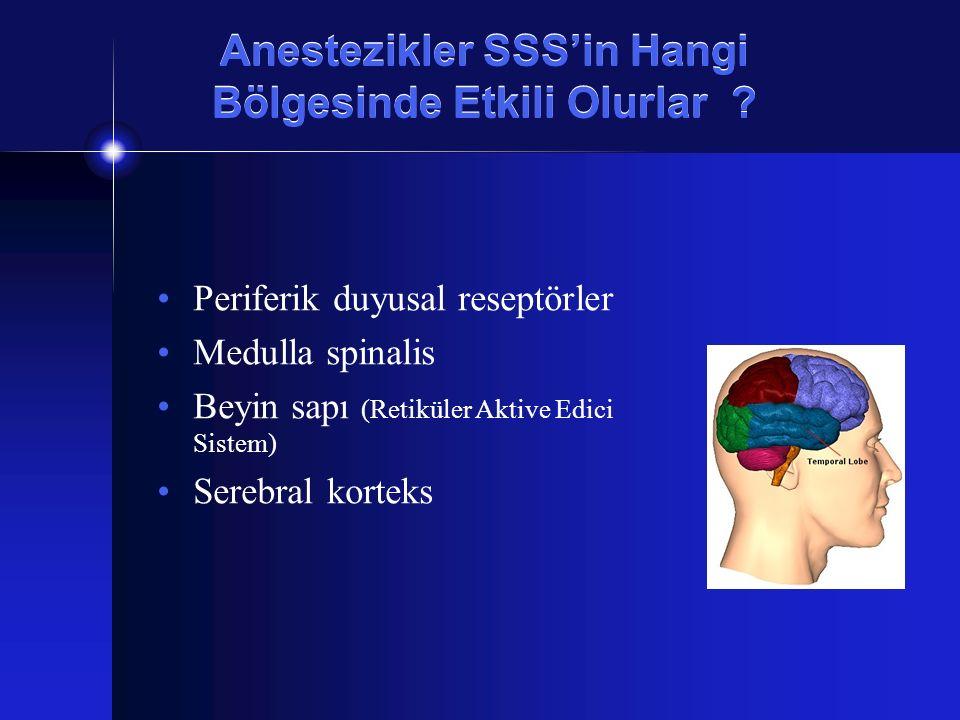 Anestezikler SSS'in Hangi Bölgesinde Etkili Olurlar ? Periferik duyusal reseptörler Medulla spinalis Beyin sapı (Retiküler Aktive Edici Sistem) Serebr