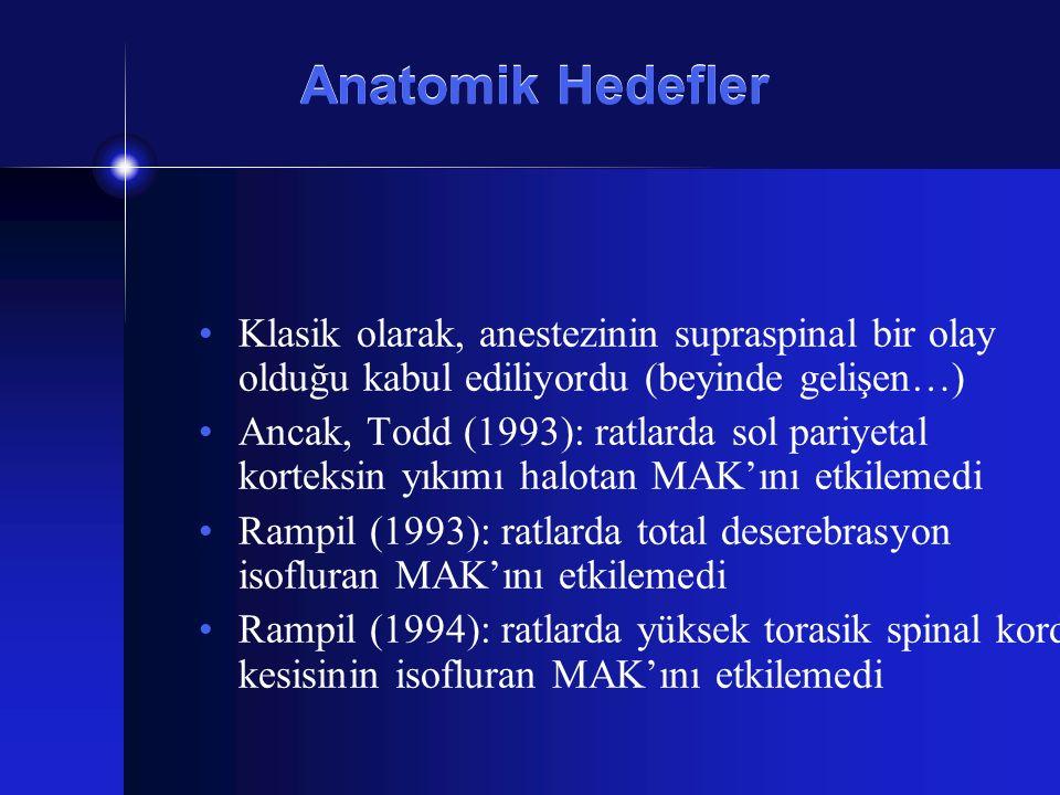 Anatomik Hedefler Klasik olarak, anestezinin supraspinal bir olay olduğu kabul ediliyordu (beyinde gelişen…) Ancak, Todd (1993): ratlarda sol pariyeta