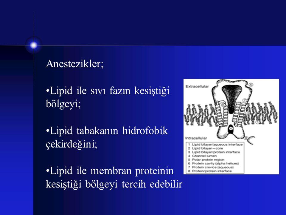 Anestezikler; Lipid ile sıvı fazın kesiştiği bölgeyi; Lipid tabakanın hidrofobik çekirdeğini; Lipid ile membran proteinin kesiştiği bölgeyi tercih ede